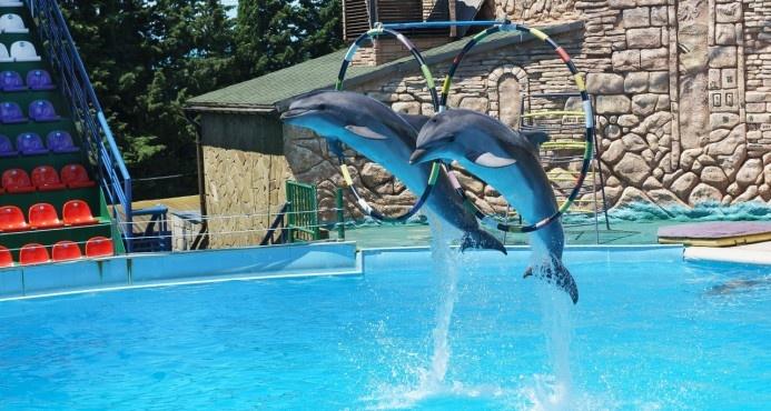 México veta el uso de delfines en espectáculos públicos