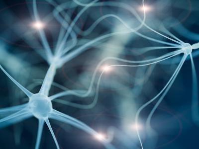 Científicos identifican nuevos tipos de neuronas humanas
