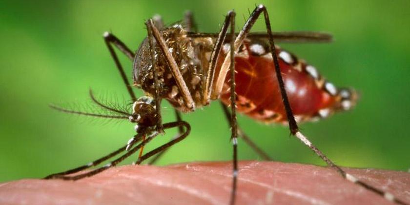 El zika aprovecha que embarazadas están bajas de defensas para atacar el feto