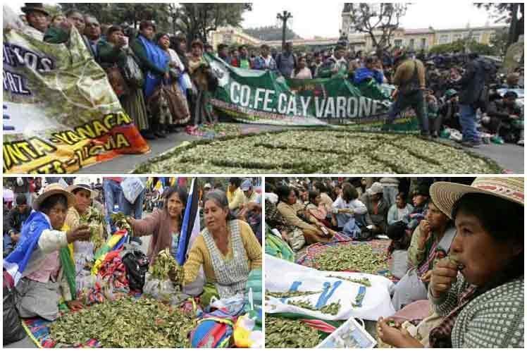 Celebran en Bolivia práctica ancestral de masticado de hoja de coca