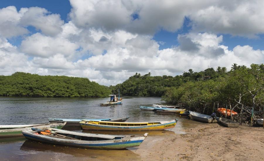 Estas hileras de bosque que separan la tierra firme del mar, más que un ornamento, son vitales para las personas y claves para el desarrollo