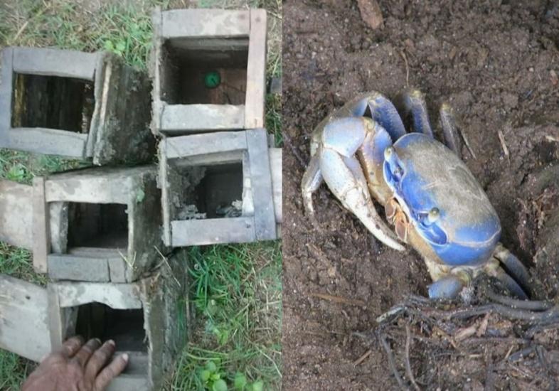 Autoridades incautan y destruyen trampas para capturar cangrejo azul en área de la bahía de Luperón
