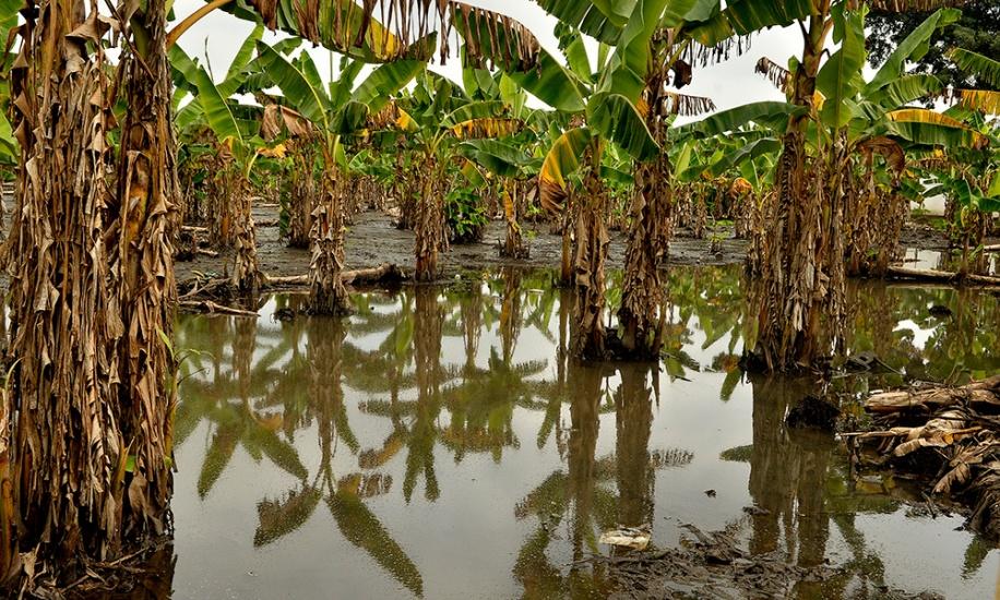 Advierten sobre la agravantes consecuencias de la sequia que afecta importantes zonas agrarias del país