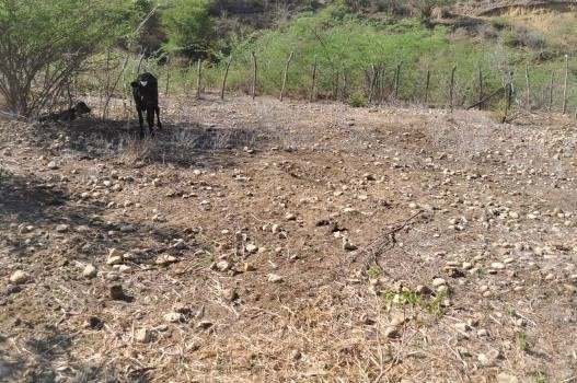 Piden asistencia del gobierno a productores agropecuarios por fuerte sequía