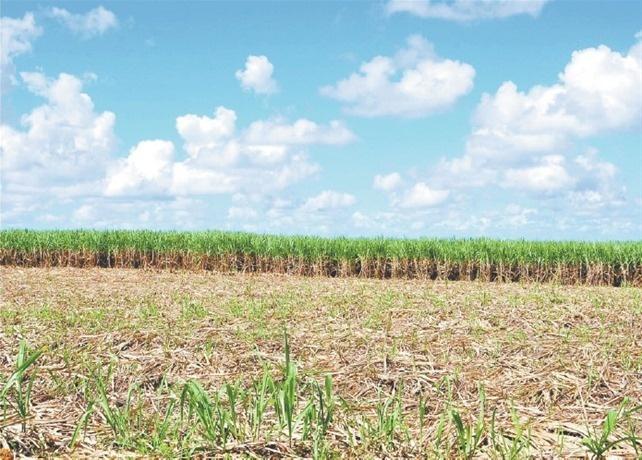 El Central Romana produjo 352,116 toneladas de azúcar