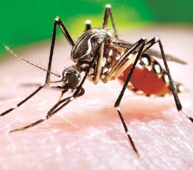 Dengue sigue cobrando terreno en el país y ya hay alerta en 21 provincias