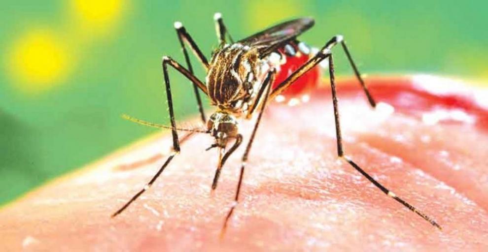 Organización Panamericana de la Salud activó alerta epidemiológica en Latinoamérica