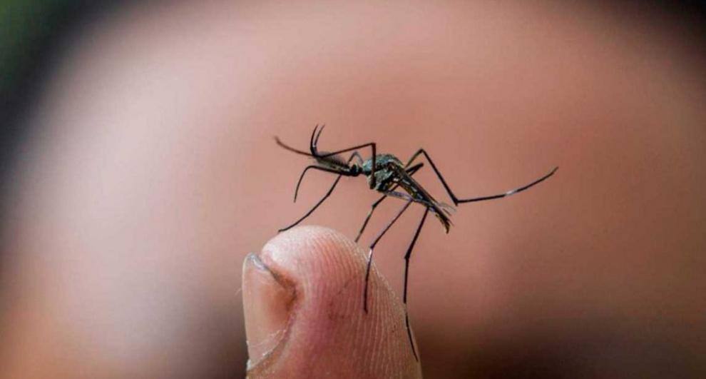 Asciende a 30 el número de fallecidos por dengue en Dominicana