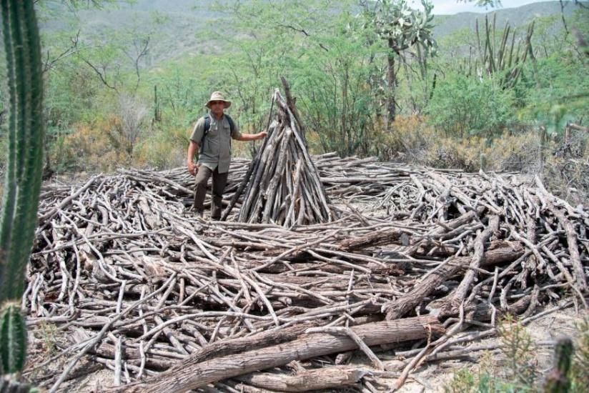 Un Día Mundial del Medio Ambiente con grandes retos para RD