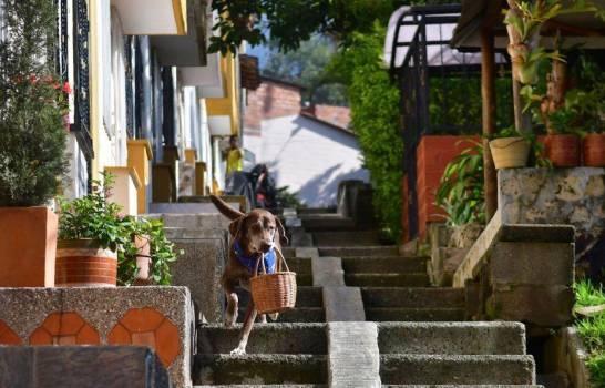 Ero, un perro que ayuda a tienda en Colombia a mantener distancia social
