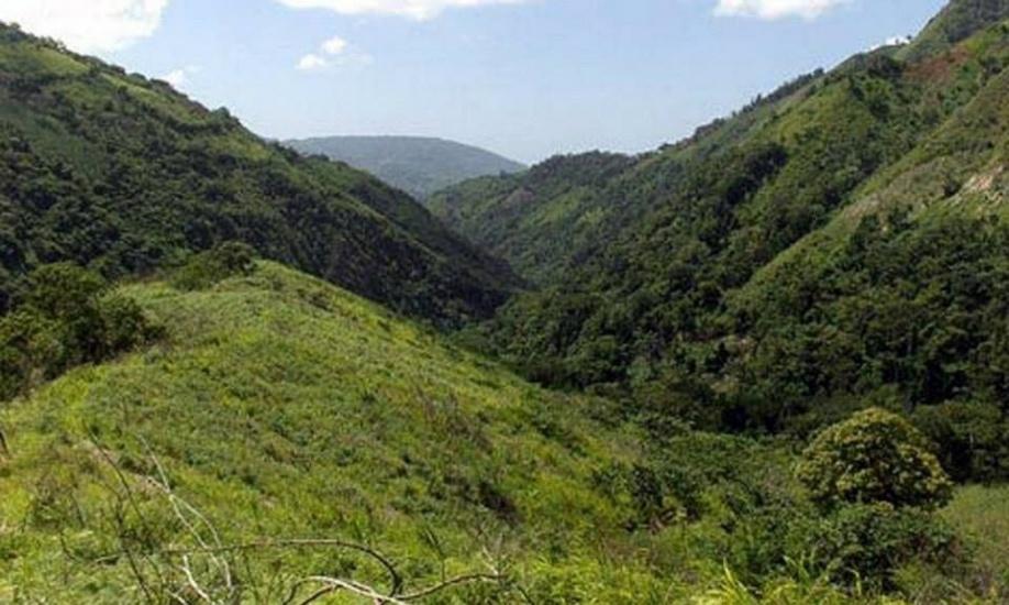 Documental internacional expone la siembra ilegal de aguacate en Sierra de Bahoruco