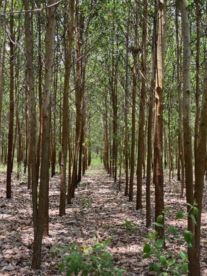 Empresarios solicitan a gobierno la reactivación del sector forestal