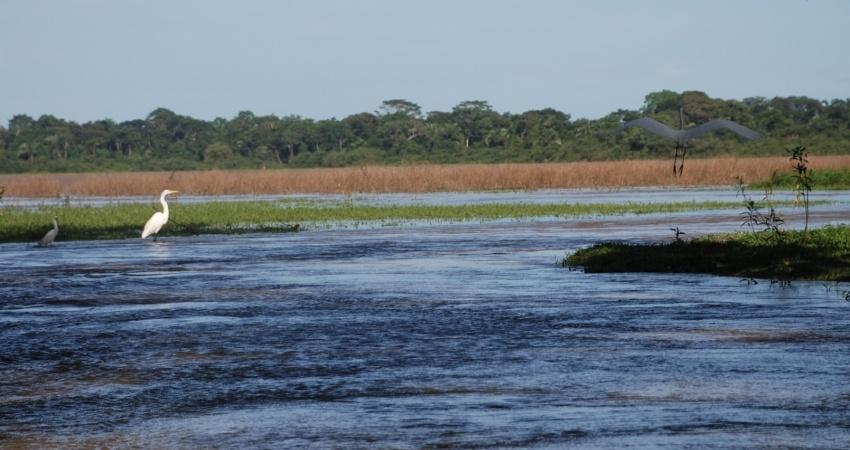 América Latina y el Caribe abordará desafíos ambientales y recuperación verde durante reunión ministerial en enero