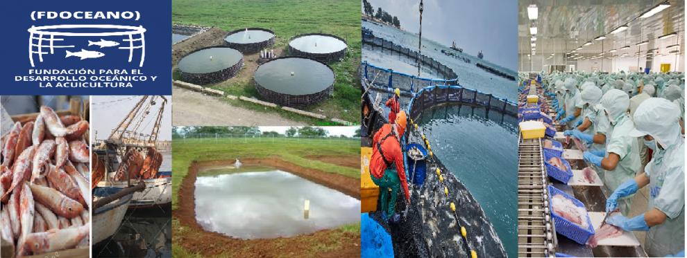 Valoran sector pesquero como fuente para crear millares de empleos en Dominicana