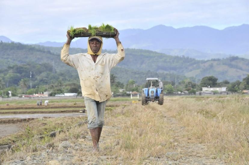Ministro de Agricultura asegura precios del arroz se mantendrán estables, comerciantes lo suben dos veces