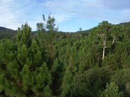 En Día Internacional de los Bosques, Jorge Mera dice su objetivo es restaurarlos