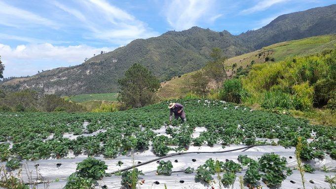 Valle Nuevo: emergencia ambiental latente